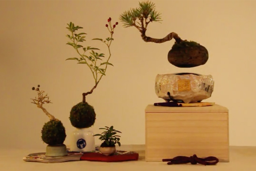 Air Bonsai - Magically Floating Bonsai Tree