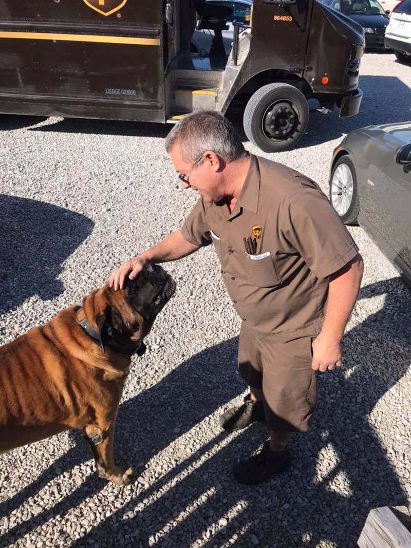 UPS Drivers Share Pictures Of Adorable Dogs At UPS Dogs Facebook Page