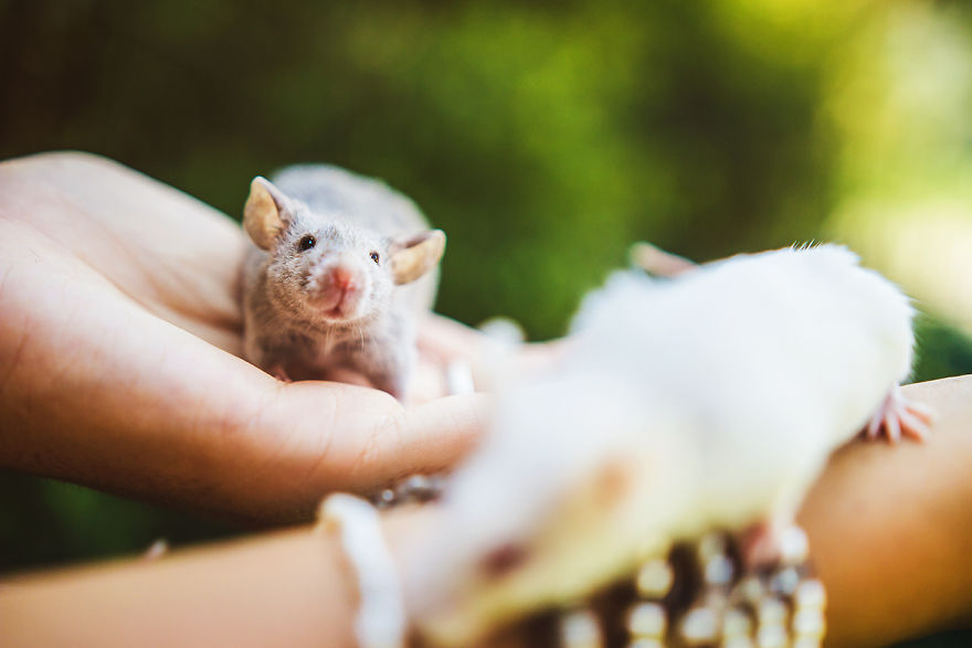 Rachele Totaro Captured Cute Expressions Of Ex-Lab Rats and Mice Enjoying Their First Outdoor Moments