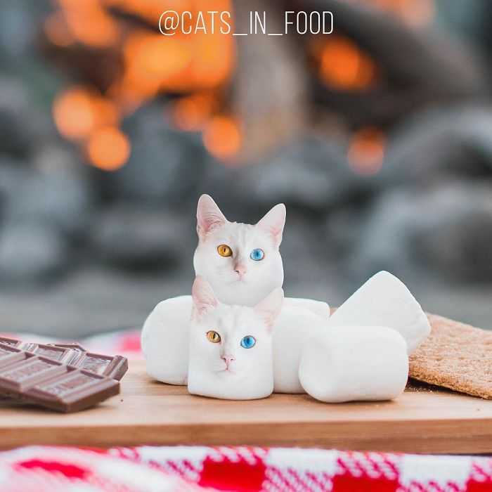 Artist Mixed Cats Into Food To Create Deliciously Cute Meal Photos