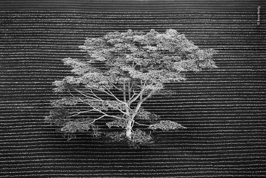 Isolated by Anna Henly, UK - Wildlife Photographer of the Year Launches LUMIX People's Choice Award