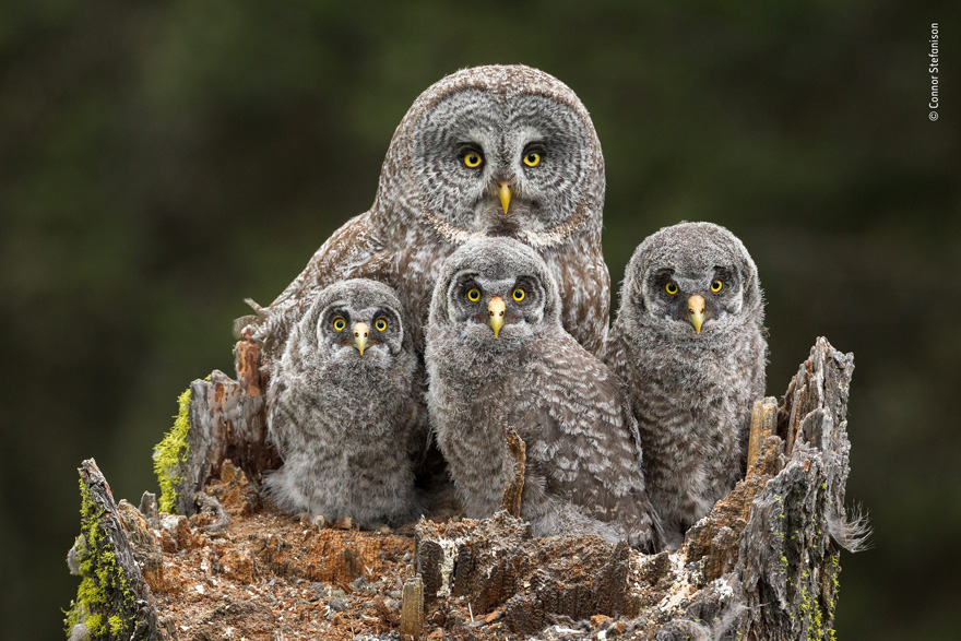 Family Portrait by Connor Stefanison, Canada - Wildlife Photographer of the Year Launches LUMIX People's Choice Award