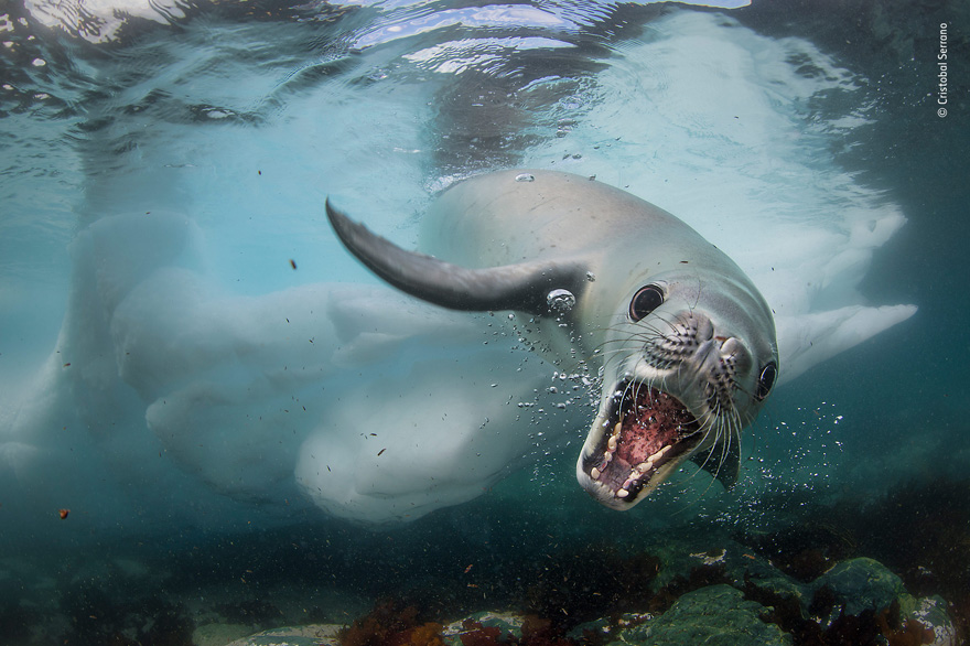 Curious Encounter by Cristobal Serrano, Spain - Wildlife Photographer of the Year Launches LUMIX People's Choice Award
