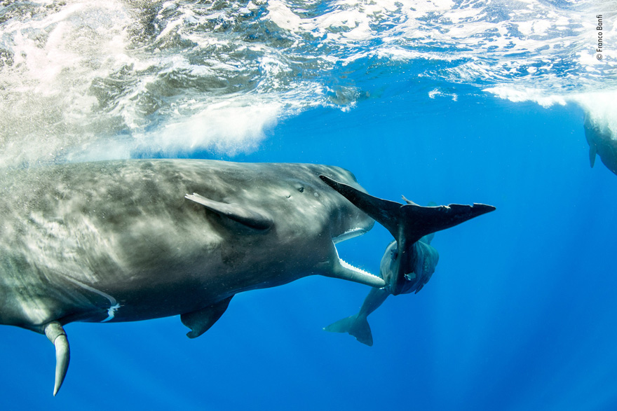 Teenager by Franco Banfi, Switzerland - Wildlife Photographer of the Year Launches LUMIX People's Choice Award