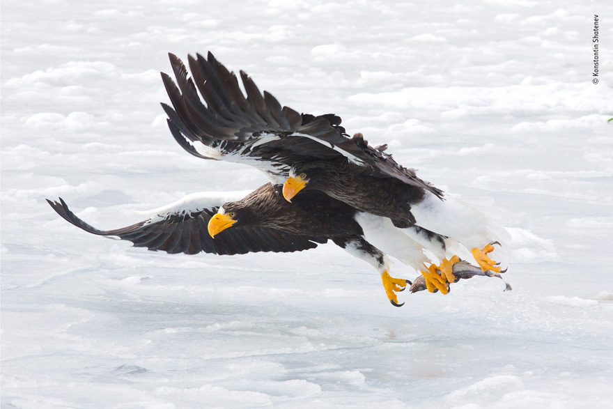 The Extraction by Konstantin Shatenev, Russia - Wildlife Photographer of the Year Launches LUMIX People's Choice Award