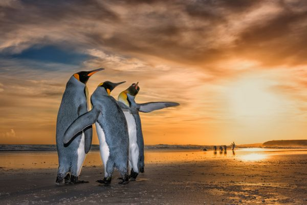 Three Kings by Wim Van Den Heever, South Africa - Wildlife Photographer of the Year Launches LUMIX People's Choice Award