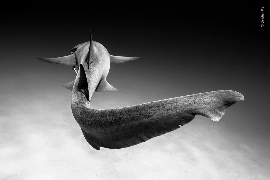 Gliding by Christian Vizl, Mexico - Wildlife Photographer of the Year Launches LUMIX People's Choice Award